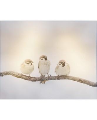 LED Paukščiai žiemos dekoracijose 20x25cm