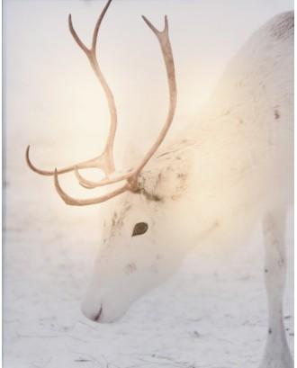 Elnias žiemos dekoracija LED 20x25cm
