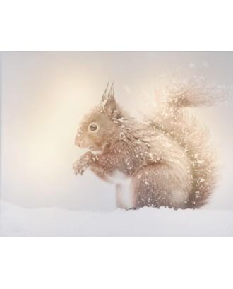 Voverė žiemos dekoracija LED 20x25cm